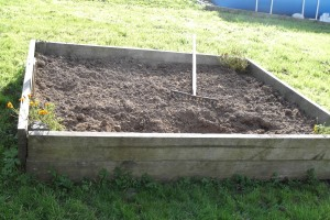 The old cucumber bed, looking all forlorn