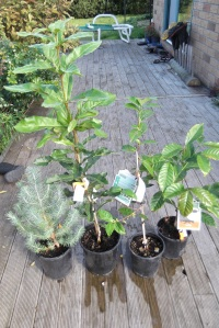 Our exciting new trees