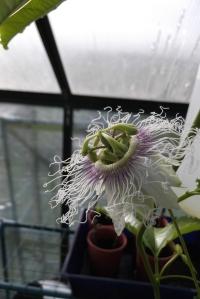 Such a strange yet beautiful flower
