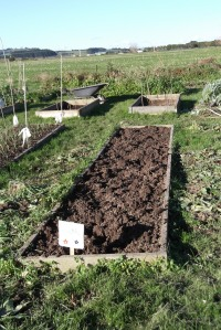 All the peas have gone, but I still need to clear away the weeds I pulled up