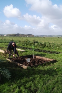 I think Hubby the Un-Gardener secretly likes digging... which is just as well as I have loads for him to do!