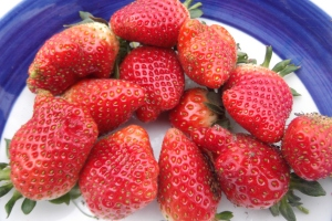 The great strawberry harvest of 2012 starts with a handful of berries