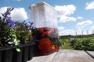 To prepare for a long hot day in the garden you need to start by making a large jug of sun tea!
