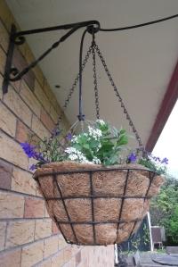 Despite the rain, my hanging baskets still needed a drink!