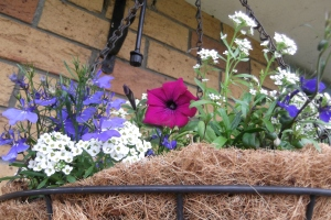 My hanging baskets are the only thing around here that remotely feel like summer.