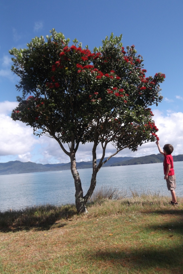 The Joeyosaurus checking out the blooming Pohutukawa tree that heralds a long hot summer