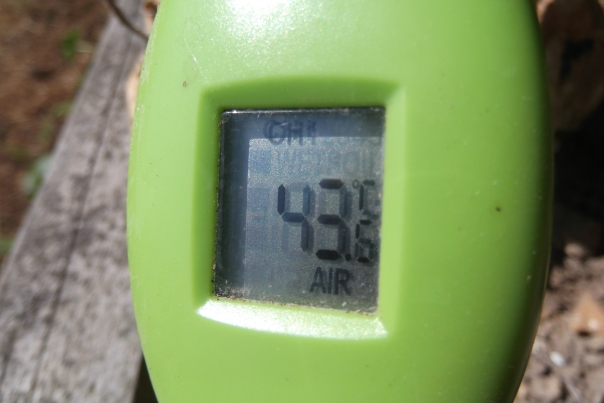 It's hot, hot, hot. My wee handy dandy device tells me it's 43.6C or 110.5F out there...  (although the device is low to the ground and out of the wind....  but it's still hot, hot hot!)