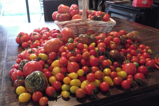 I thought I'd show off and show you today''s tomato harvest.