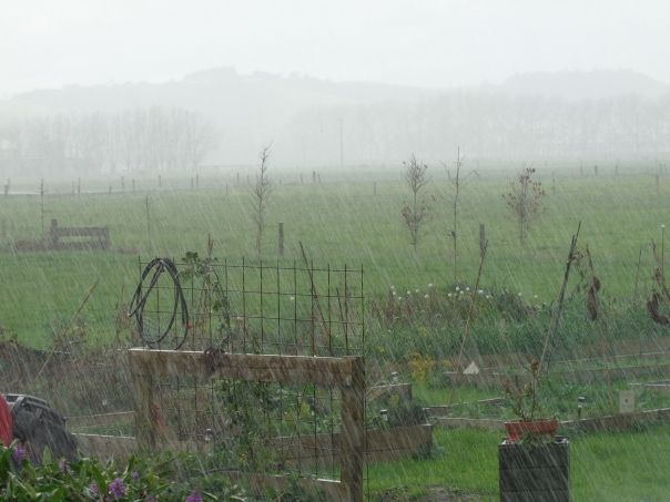 Not exactly ideal gardening conditions