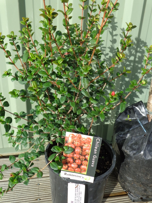 This shrub also came as a complete surprise!
