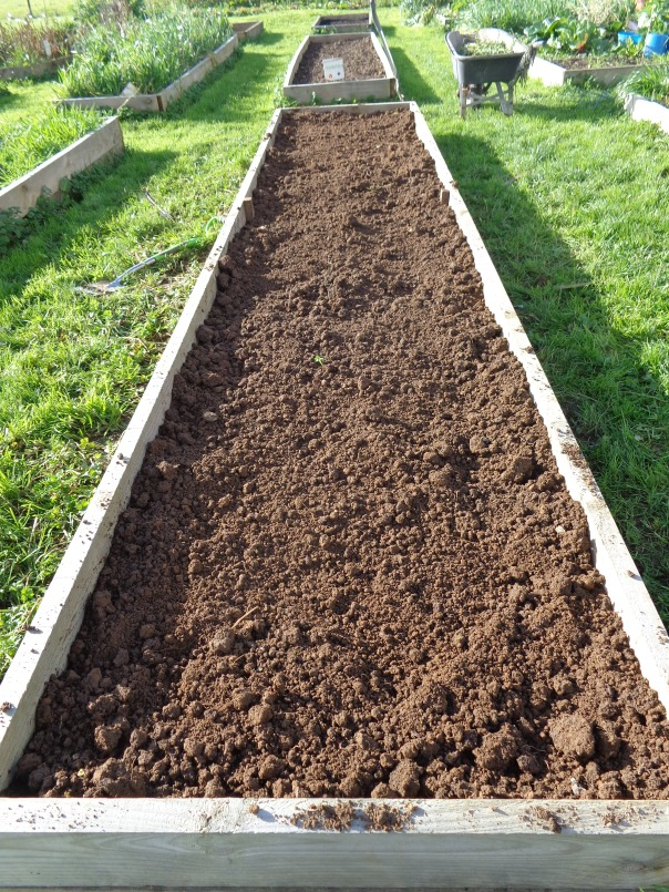 I love the look of a freshly dug bed, and this one has a worm population that would definitely have it classified as an urban demographic.