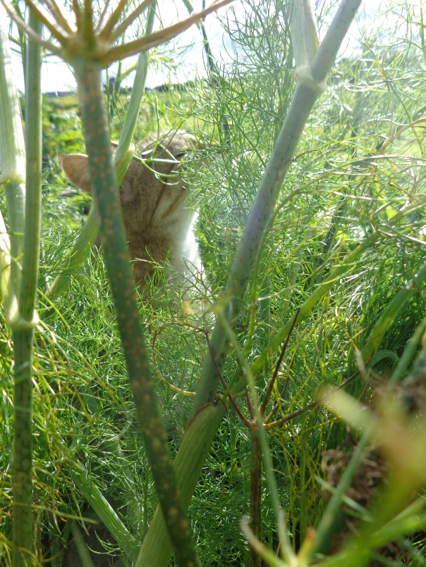 A cute photo of Toast the Cat basking in the sunshine, through the fennel.