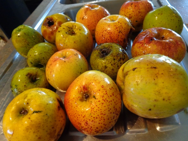 A motley bunch of apples, but they should make great juice