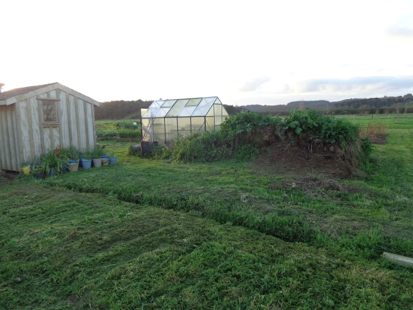 This is the spot for the new greenhouse...  the hill will be gone soon though