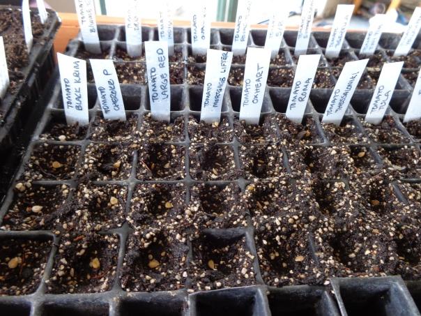 Seeds in soil!  Happy Happy Joy Joy!!