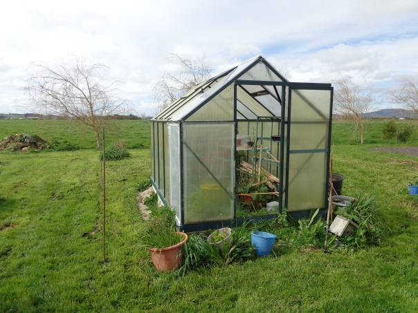 The new greenhouse is bigger than the old one ...  I've marked it out with bamboo poles.