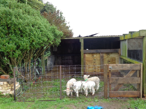 The best lamb home we have ever had.