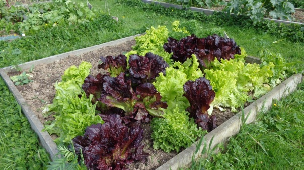 t's not like we completely stripped the garden of salad either....