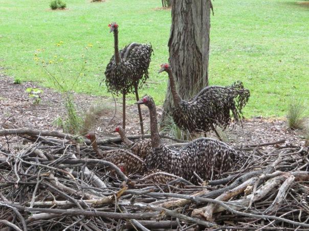An emu nest