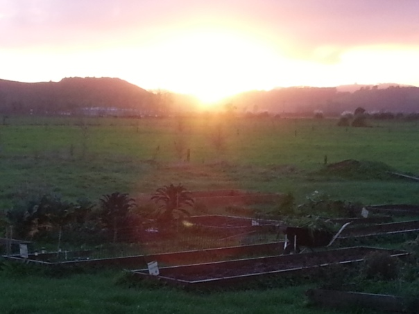 The sun rises over my garden, bringing hope with it