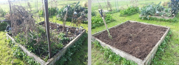 OK - I just realised I ripped you off last time and the odds and sods before and after photo was actually a repeat of the pepper before and after photo, so I have to set things right.  So this is the before and after photos of the odds and sodds bed.