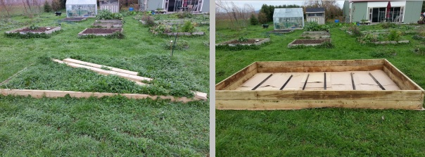 This is more of a before and middle photo as I have made the new bed for my new cut flower attempt, but Hubby the Un-Gardener just needs to fill it for me...  It is like going to the gym for him ... but different!