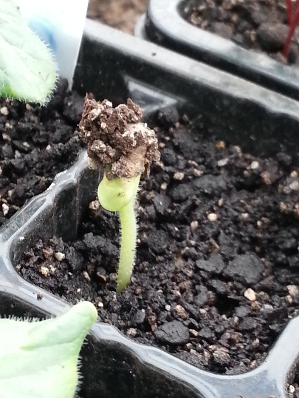 New seedlings seem to be emerging every day, some even dress for the occasion in stylish hats!