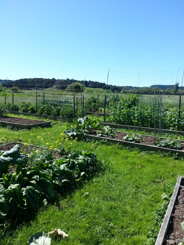 Such a lovely day in my summer garden