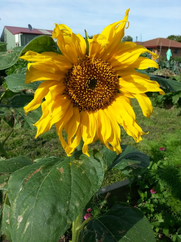 Sunny days are here again - finally..  Hooray!