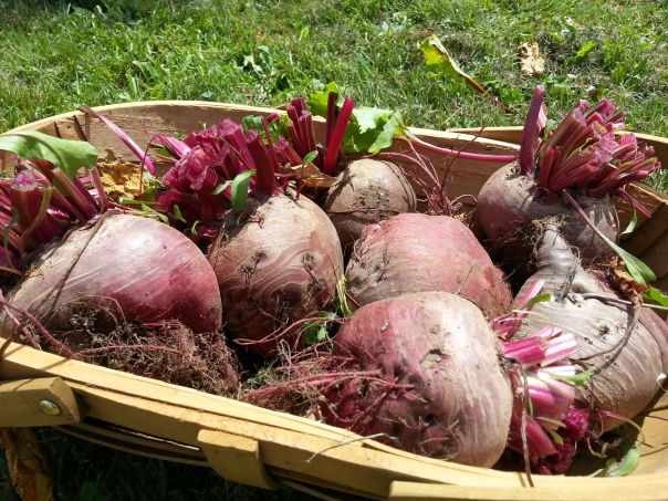 blimey...  look at the size of these beetroot!