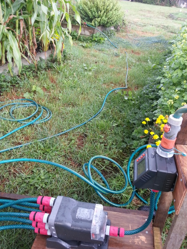 A sight to behold my most wonderful Gardena water system in action!