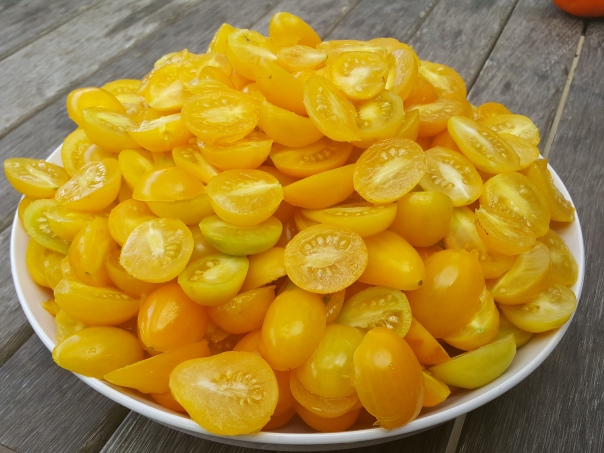 Yellow tomatoes washed and halved