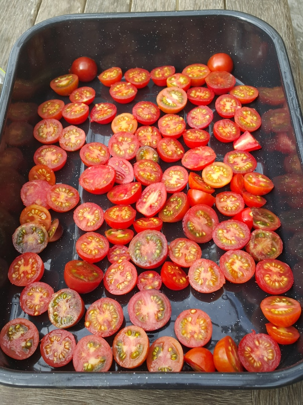 Tomatoes all ready to be sun dried in the greenhouse