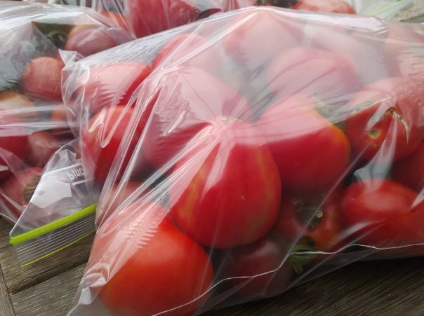 Tomatoes ready for the the  freezer