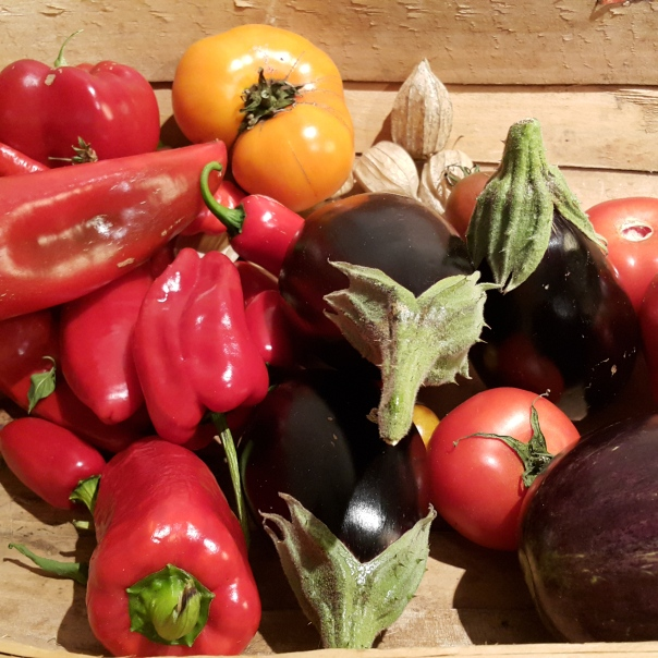 Peppers, tomatoes and eggplant