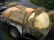 Pumpkins arrived safe and sound at the Giant Pumpkin Carnival