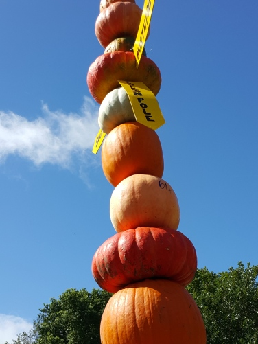 Pumpkins towered above us The Great Pumpkin Carnival