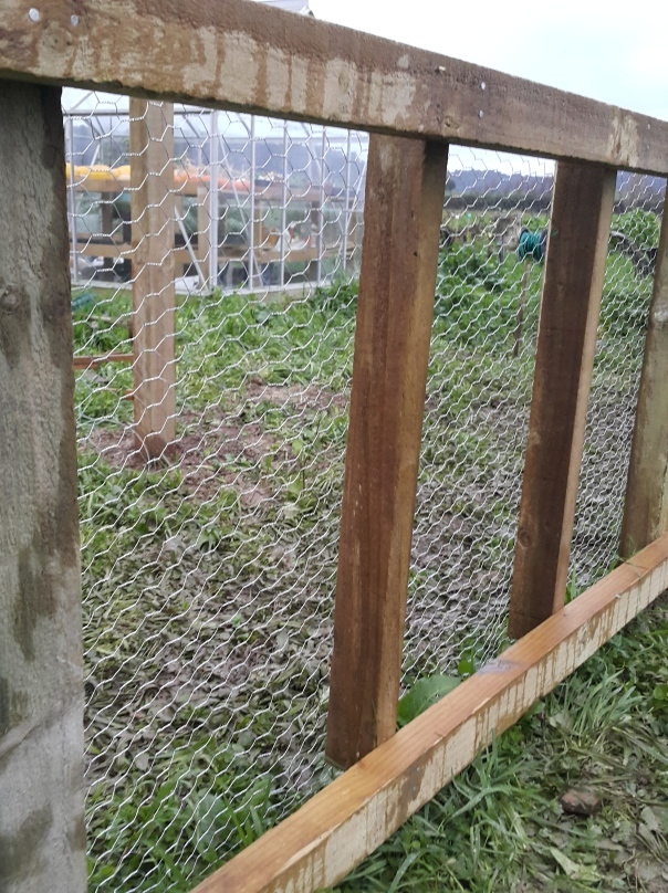 The chicken wire lined back fence