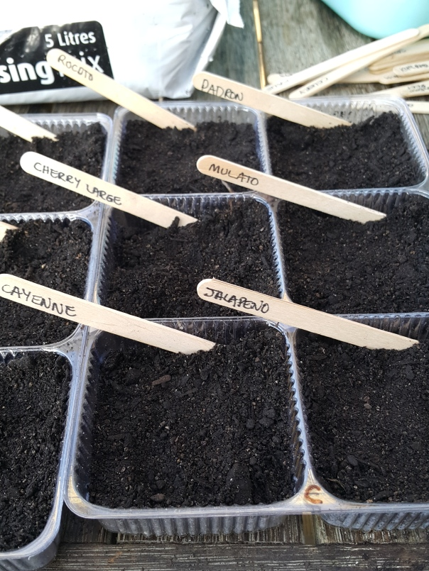 labelled seed tray