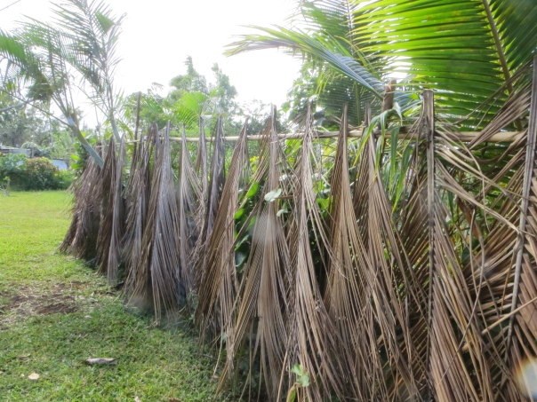 Coconut leaf chicken proof fencing in Vanuatu