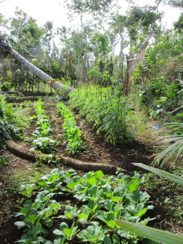 A fabulously productive veggie patch