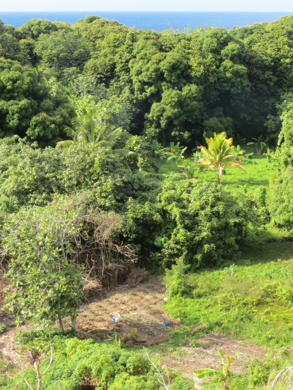 A veggie patch on Dravuni Island in Fiji