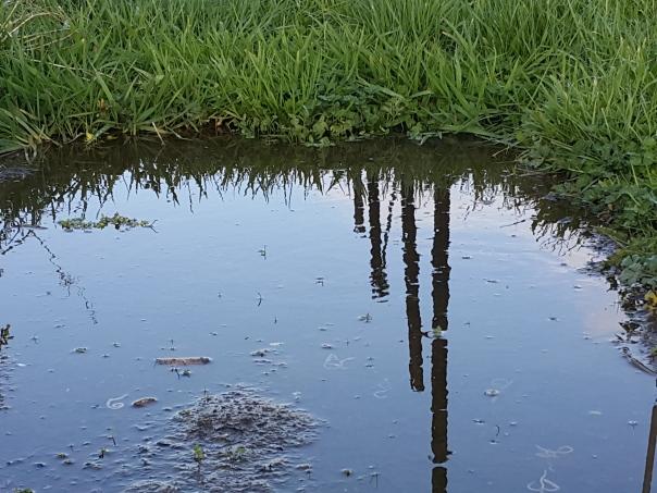 Sadly this isn't a pond