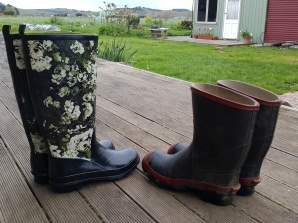 Then it was off with the speaking gumboots in into the real work gumboots to get stuck into my much neglected garden