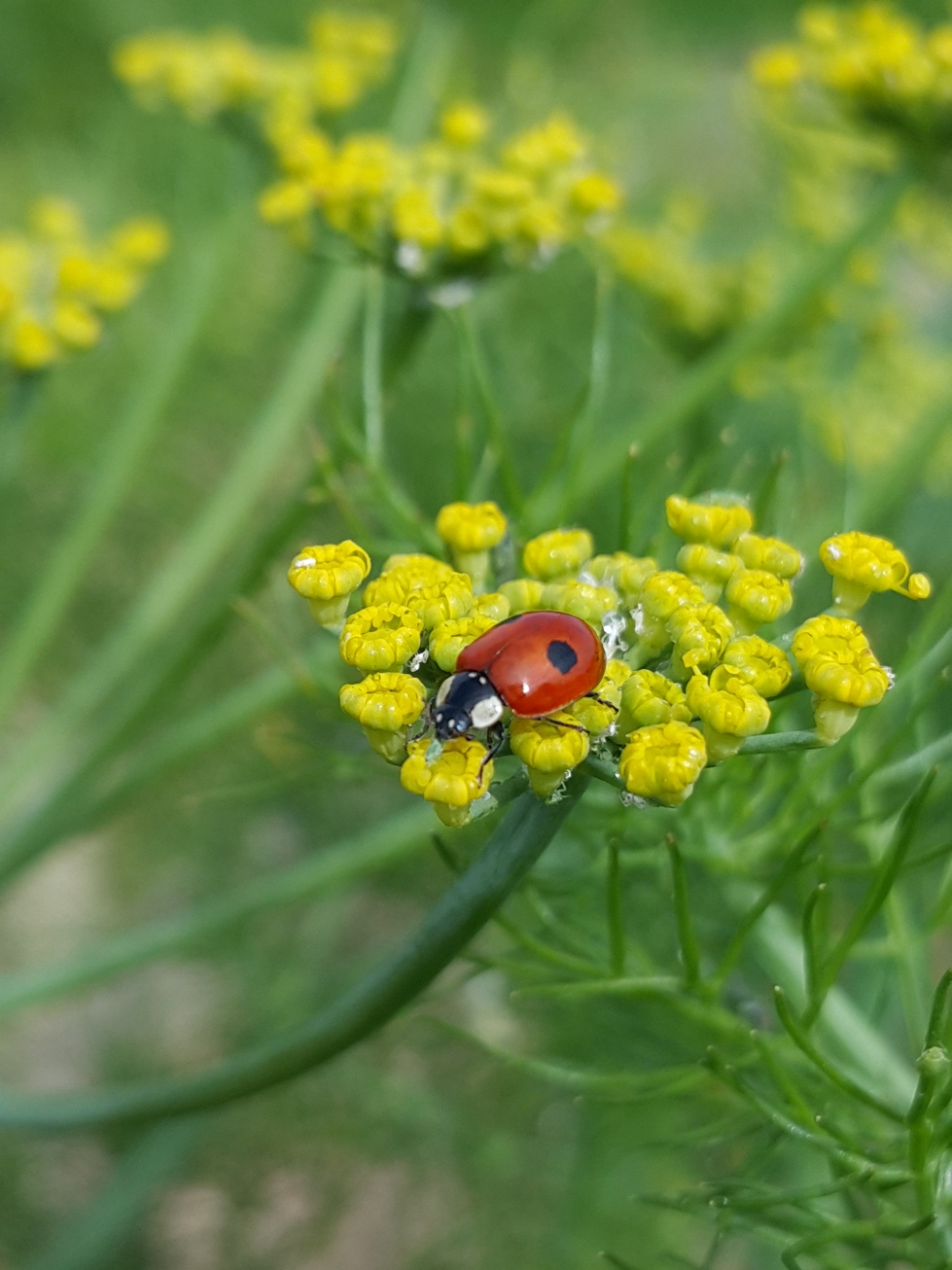 I would happily have loads of ladybirds in my garden