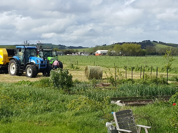 A lovely surprise to come home to was tractors in the garden making hay... the sun must have been shining