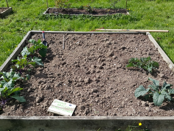 The Brassica Bed