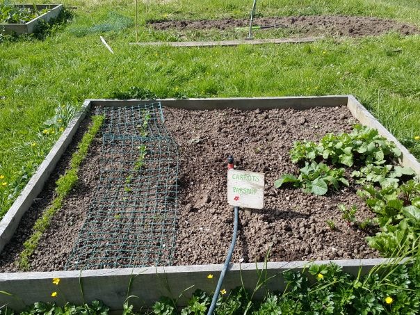 The Carrot and Parsnip Bed