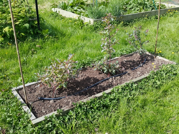 The Blueberry Bed
