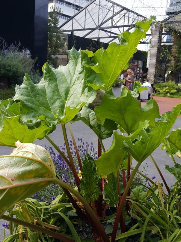 Rhubarb by the train station